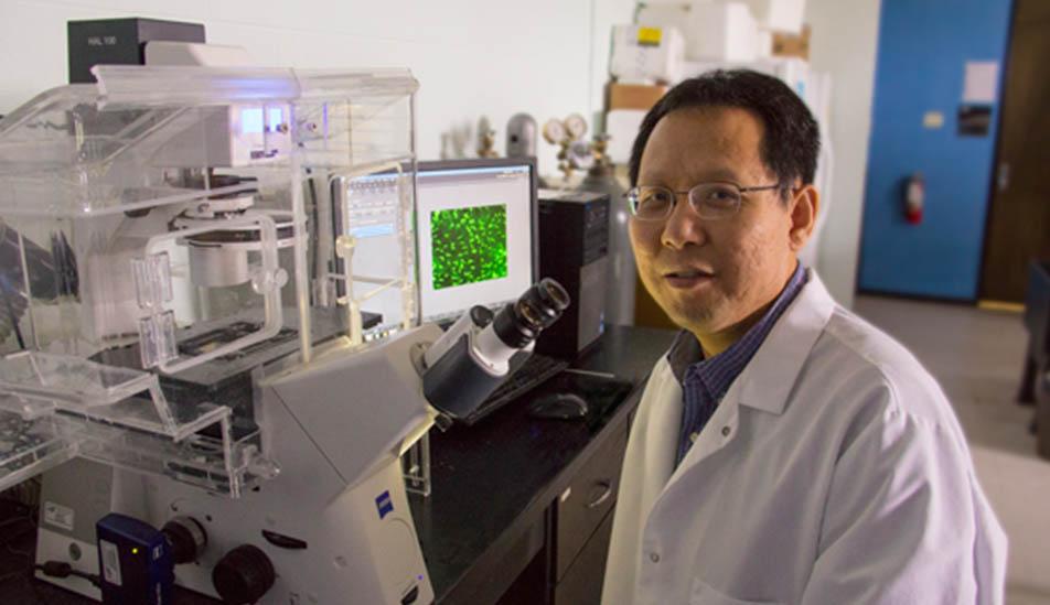 Wichita State University Associate Professor Biological Sciences Li Yao pictured in a lab on campus